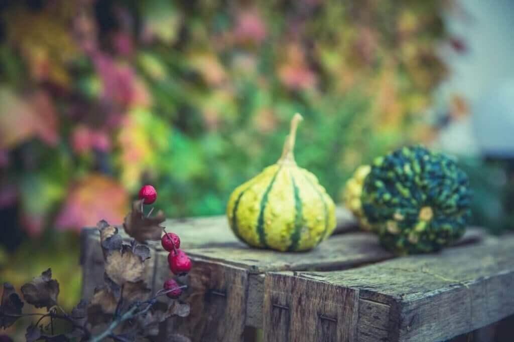 garden fall